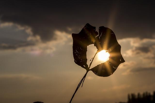 heart on a leaf against the sun