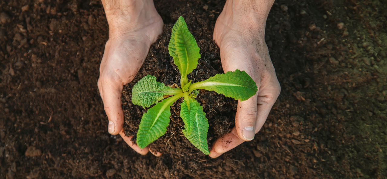 Hands planting in the soil